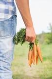 Agricoltore che tiene mazzo di carote organiche Immagini Stock