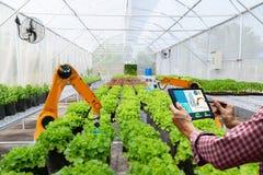 Agricoltore che tiene un raccolto robot astuto della compressa nell'automazione futuristica del robot di agricoltura per lavorare immagine stock