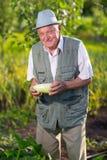 Agricoltore che tiene zucchini fresco in orto Immagine Stock Libera da Diritti