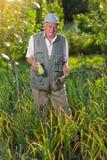 Agricoltore che tiene zucchini fresco in orto Fotografie Stock