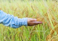 Agricoltore che tocca il suo raccolto con la mano in un giacimento di grano Immagine Stock