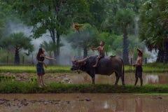 Agricoltore che utilizza bufalo ad arare il giacimento del riso nella s piovosa venente Fotografia Stock