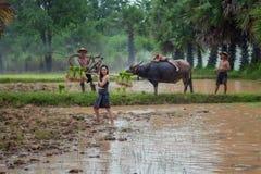 Agricoltore che utilizza bufalo ad arare il giacimento del riso nella s piovosa venente Fotografia Stock Libera da Diritti