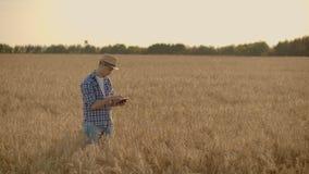 Agricoltore che utilizza compressa nel giacimento di grano Scienziato che lavora nel campo con tecnologia di agricoltura Chiuda s archivi video