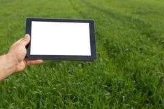 Agricoltore che utilizza il computer della compressa nel giacimento di grano verde Schermo bianco Fotografie Stock