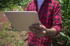 Agricoltore che utilizza il computer digitale della compressa nella piantagione coltivata del campo di grano Fotografie Stock Libere da Diritti