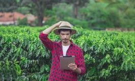 Agricoltore che utilizza il computer digitale della compressa nella piantagione coltivata del giacimento del caffè Fotografia Stock