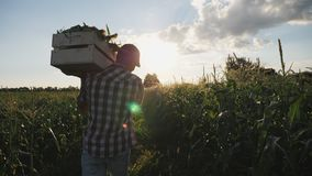 Agricoltore che va sul campo con una scatola di legno piena di cereale stock footage