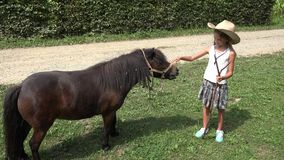 Agricoltore Child Looking Pony Horse di pascolo, cowboy Girl Playing, pascolante 4K video d archivio