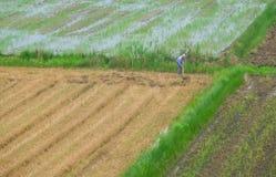 Agricoltore cinese che lavora in un campo nella campagna cinese Immagini Stock