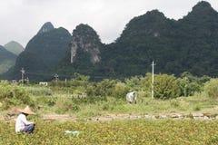 Agricoltore cinese che si siede nel prato Fotografie Stock Libere da Diritti