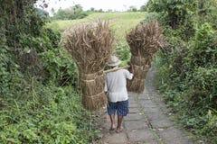 Agricoltore con i canestri della paglia, Bali Immagini Stock