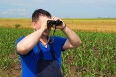 Agricoltore con il binocolo nel campo di grano Immagine Stock