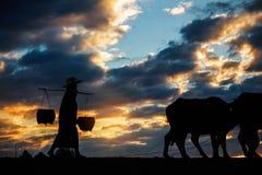 Agricoltore con il bufalo al tramonto Fotografia Stock