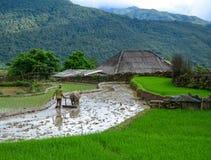 Agricoltore con il bufalo sul giacimento del riso Fotografia Stock Libera da Diritti