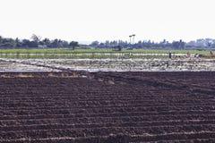 Agricoltore con il campo in Tailandia, agricoltura Fotografia Stock Libera da Diritti