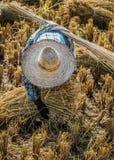 Agricoltore con il cappello di paglia che funziona durante il raccolto del riso Fotografia Stock