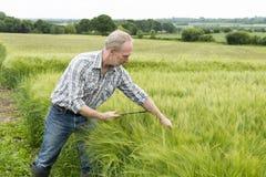 Agricoltore con il computer della compressa che controlla le piante verdi del grano Fotografie Stock Libere da Diritti