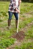 Agricoltore con il letto del giardino di sarchiatura di rearer all'azienda agricola Immagini Stock Libere da Diritti