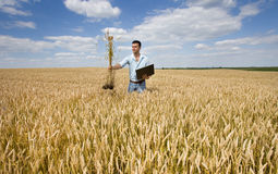 Agricoltore con il mazzo del grano e del computer portatile Fotografie Stock