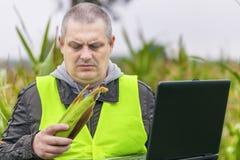 Agricoltore con il PC ed il cereale nelle mani sul campo Immagine Stock Libera da Diritti