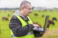 Agricoltore con il PC vicino alle mucche al pascolo Immagine Stock