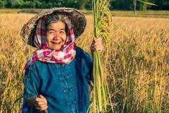 Agricoltore con il raccolto del riso, agricoltore di concetto Fotografie Stock