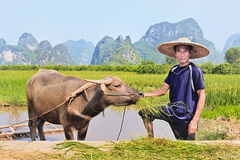 Agricoltore con il suo bufalo con le montagne di morfologia carsica sui precedenti, Yangshuo, Cina Fotografia Stock Libera da Diritti