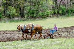 Agricoltore con l'aratura dei cavalli Fotografia Stock Libera da Diritti