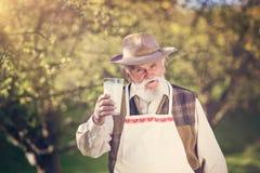 Agricoltore con la brocca di latte Immagine Stock