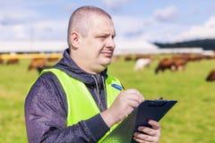 Agricoltore con la cartella vicino alle mucche al pascolo Immagini Stock Libere da Diritti