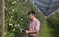 Agricoltore con la compressa in frutteto fotografie stock
