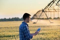 Agricoltore con la compressa nel campo al tramonto Fotografia Stock