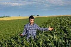 Agricoltore con la compressa nel campo di grano Fotografia Stock