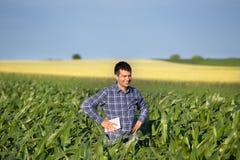 Agricoltore con la compressa nel campo di grano Fotografia Stock Libera da Diritti