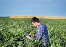 Agricoltore con la compressa nel campo di grano Immagini Stock Libere da Diritti
