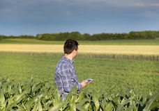 Agricoltore con la compressa nel campo di grano Fotografie Stock Libere da Diritti
