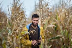 Agricoltore con la compressa nel campo di grano Immagini Stock