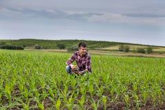 Agricoltore con la compressa nel campo di grano in primavera Fotografia Stock Libera da Diritti