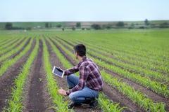 Agricoltore con la compressa nel campo di grano in primavera Immagini Stock