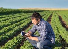 Agricoltore con la compressa nel giacimento della soia Fotografie Stock