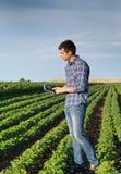 Agricoltore con la compressa nel giacimento della soia Immagini Stock Libere da Diritti