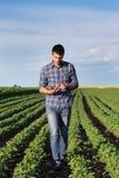 Agricoltore con la compressa nel giacimento della soia Fotografia Stock Libera da Diritti