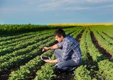 Agricoltore con la compressa nel giacimento della soia Immagine Stock