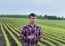 Agricoltore con la compressa nel giacimento della soia in primavera Immagini Stock Libere da Diritti