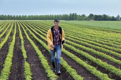 Agricoltore con la compressa nel giacimento della soia in primavera Fotografie Stock Libere da Diritti