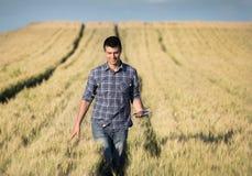 Agricoltore con la compressa nel giacimento di grano Immagini Stock