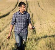 Agricoltore con la compressa nel giacimento di grano Fotografie Stock