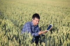 Agricoltore con la compressa nel giacimento di grano verde Immagini Stock Libere da Diritti