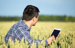 Agricoltore con la compressa nel giacimento di grano verde Immagini Stock
